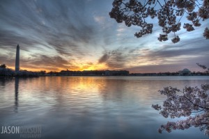 Sunrise over DC's tidal basin during the cherry blossom full bloom.